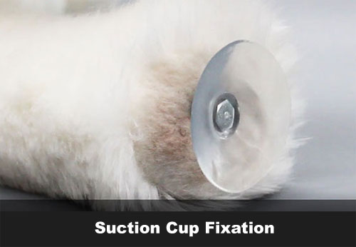Suction Cup Fixation | Toy for Dogs Males